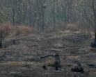 Pengelolaan Hutan Sangat Buruk