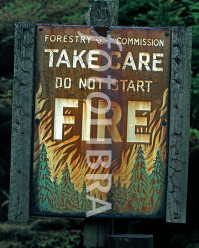 Local administrations, companies warned on forest fires