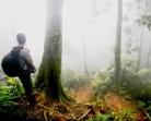 Hutan : Kekuasaan dan Joko Widodo