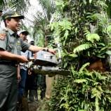 Press Release : Sawit Ilegal Dalam Kawasan Hutan Lindung Dimusnahkan