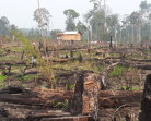 Government urged to save Tesso Nilo National Park