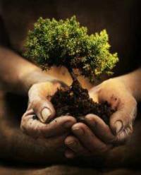 Pemerintah Baru Harus Fokus Lestarikan Hutan