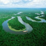 Upaya Pemulihan Fungsi Hutan di Aceh Tamiang, Berlanjut