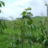 Hutan Adat Belum Juga Direalisasikan