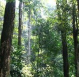 Dua Hutan Adat Ditetapkan