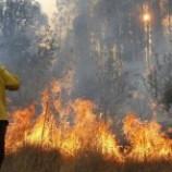 Agar Hutan tak Terbakar