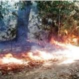 Pencegahan Kebakaran Diprioritaskan