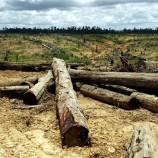 Tekan Deforestasi, Indonesia Utamakan Land Swap