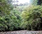Hak Hutan Masyarakat Adat Dipetakan