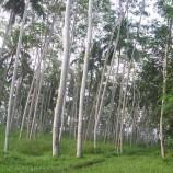 """Moratorium : Sudahkah Melindungi Hutan dan Gambut Tersisa di Riau """"Urgensi Penguatannya"""""""