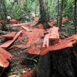 5,7 Juta Hektar Terancam Deforestasi