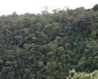 Hutan Dikonversi Jadi Lahan Pangan, Biodiversitas Terancam