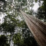 Pelanggaran Moratorium Hutan dan Lahan Gambut