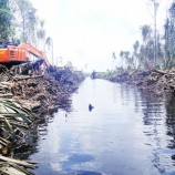 Weak moratorium endangers peatlands in Riau