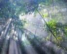 Putusan MK Belum Berhasil Tetapkan Hutan Adat
