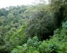 Perkuat Moratorium Hutan