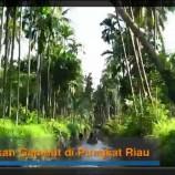 Video : Pembukaan Hutan Di Pungkat Diusut PPNS