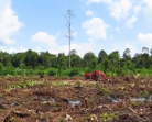 Video : Perusakan Gambut di Pungkat Riau