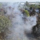 Kasus Pembakaran Lahan di Riau Mangkrak