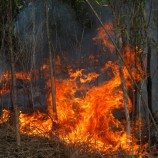 Walhi to Gather Complaints on Forest Fires