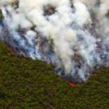 LSM TELAPAK: Gandeng Mantan Pelaku Illegal Logging Masuk KHJP