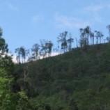 Target Restorasi 1,79 Juta Hektar
