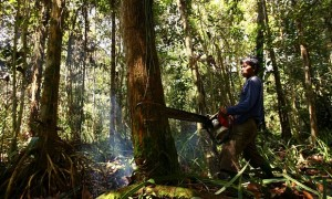 Indonesia is one of the world's biggest greenhouse gas emitters, primarily due to deforestation, peatland degradation and forest fires. Photograph: Yusuf Ahmad/Reuters (Source : theguardian.com)