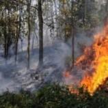 1.820 Titik Api Masih Membara, Bencana Asap Meluas