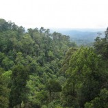 New Permit Policy 'Could Increase Deforestation'