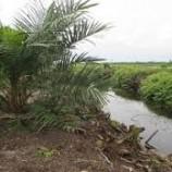 BNPB Memerlukan Pompa Akibat Perbedaan Elevasi Sungai dan Lahan