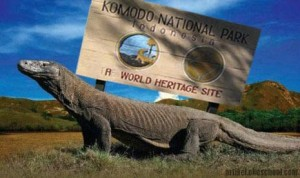 large-komodo-di-taman-nasional-pulau-komodo-_130118155917-868 copy