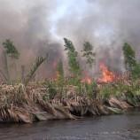 Protecting Peatland