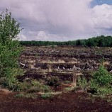 Govt To Restore Damaged Peatlands