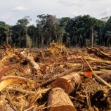 Repost Finds SVLK Fails To Stop Illegal Logging