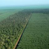 Pemerintah Diminta Cabut Pembekuan Izin Perusahaan HTI