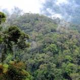 Lima NGO Dukung Sungkup Jadi Hutan Adat
