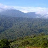 Aceh group files class action suit to save Leuser