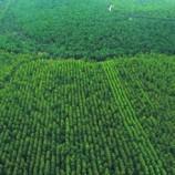 Pemerintah Tetapkan 3,6 Juta Ha Hutan Adat