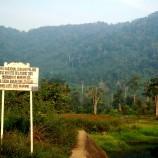 Suara Gergaji Menghilang, Suara Burung Datang, Menjaga Hutan dengan Diskon Pengobatan (4)