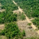 Enam Gubernur Sepakat Kurangi Penebangan Hutan