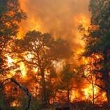 Menyelamatkan hutan dan Mengurangi Emisi Moratorium Perizinan