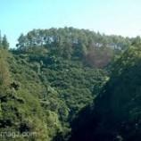 Penguatan Menjadikan Moratorium Hutan Lebih Efektif