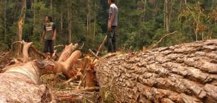 Perampasan Wilayah Adat Talang Mamak