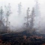 Ambil Alih Pengusutan Kebakaran Hutan di Riau