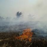 Ratusan Hutan di Kalimantan Barat Rawan Karhutla