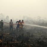 Panja Himpun Data Kebakaran Hutan