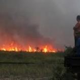 MUI Haramkan Membakar Hutan