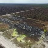 kementerian Kehutanan Lanjutkan Penyelidikan PT APSL