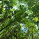 KLHK pulihkan 1,059 juta hektare sepanjang 2016