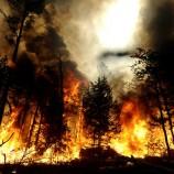 KLHK nyatakan perang terhadap pelaku pembakar hutan